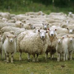 Tudástár: Agrár szaktanácsadás (EIP-AGRI)