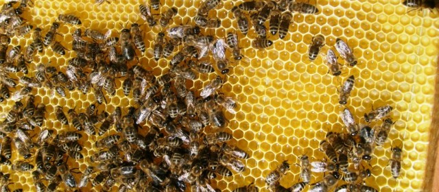 Korlátozások a fiatal gazdák méhészeteiben.