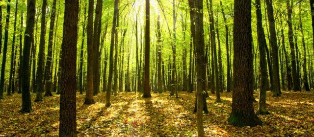 Már 0,5 ha erdő telepítésre is lehet pályázni